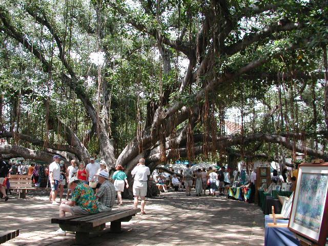 Banyan Tree Craft Fair